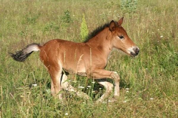 фото конька горбунка